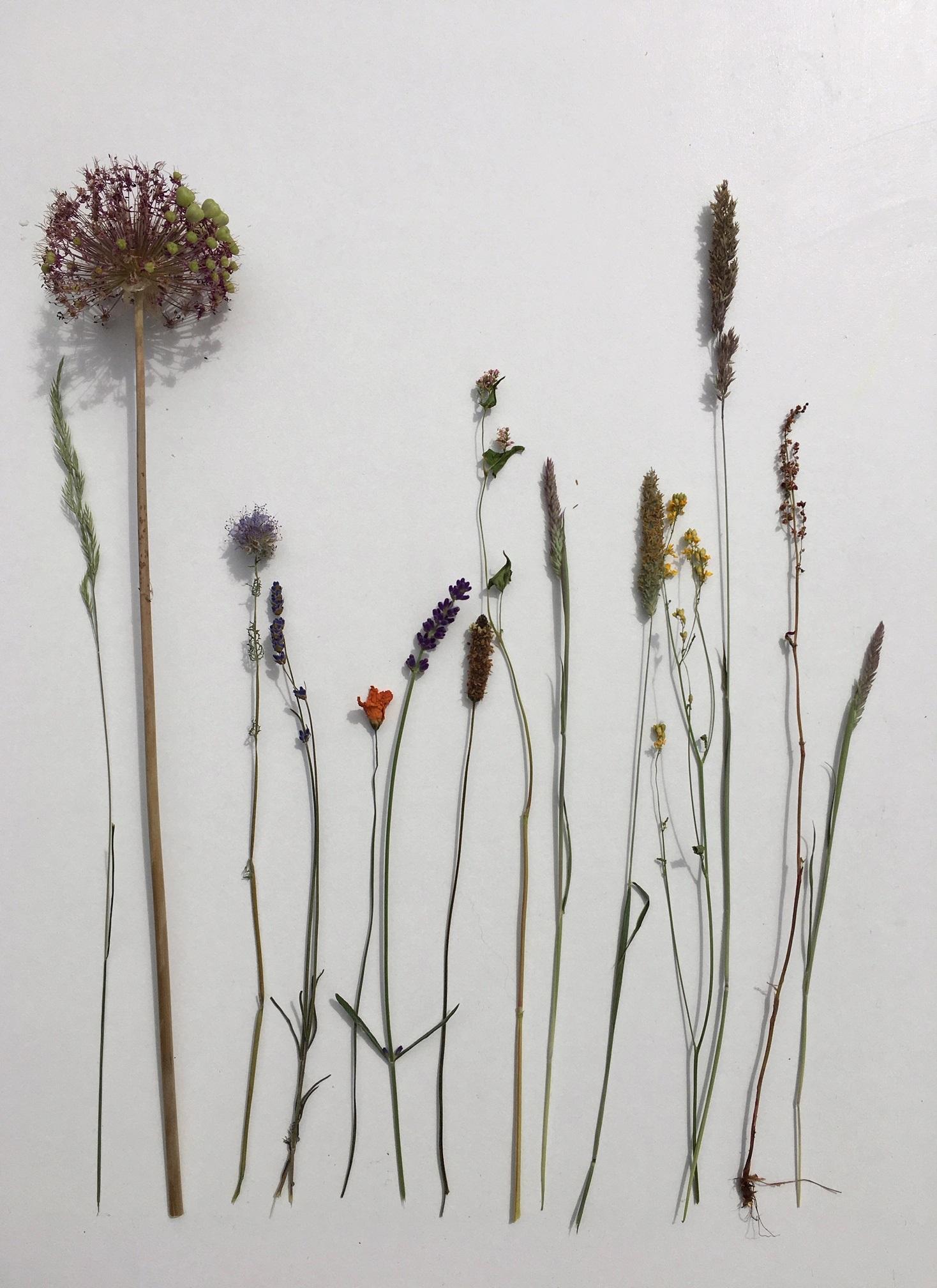 zelf bloemen drogen